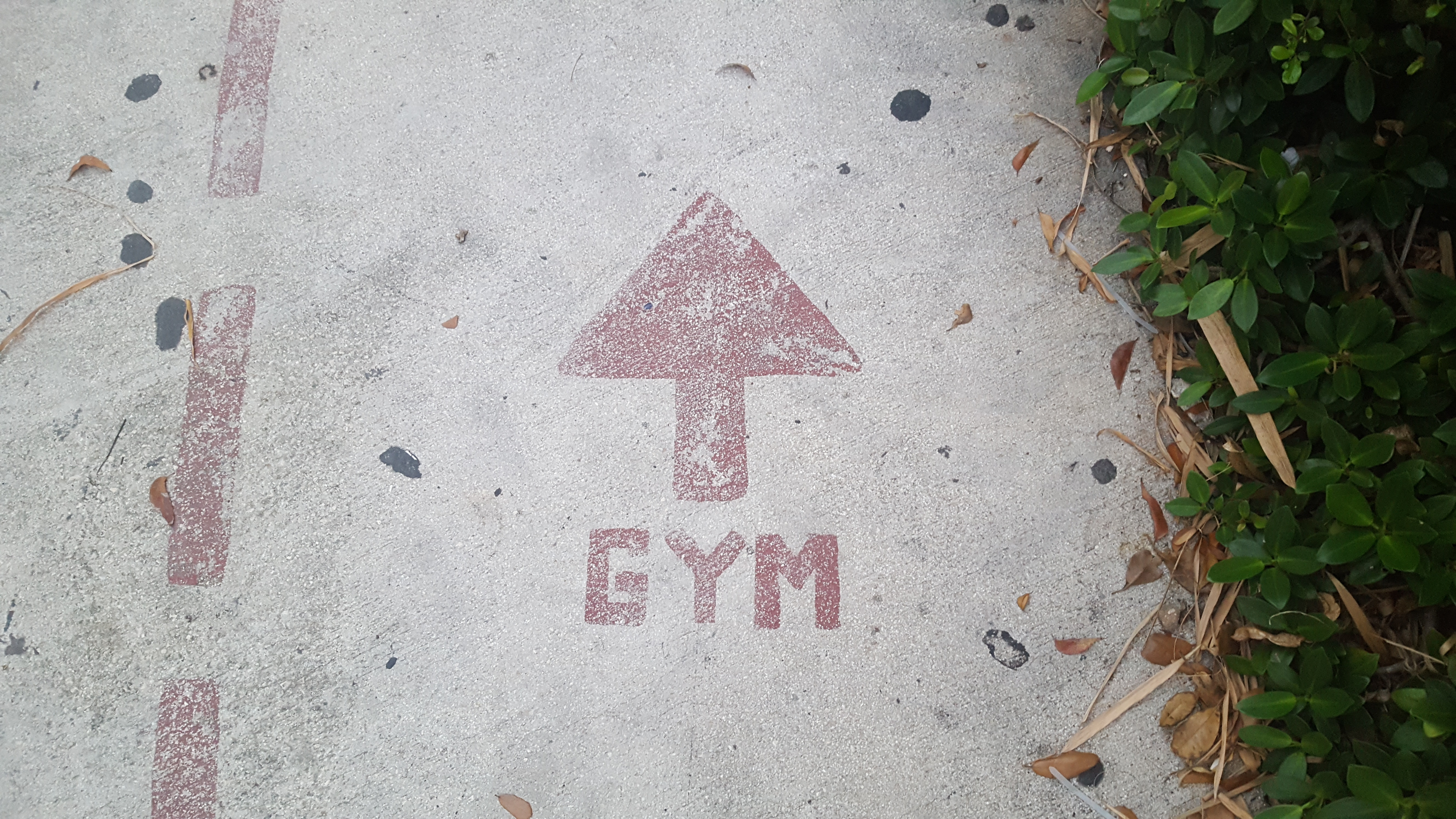 Three unexpected discoveries about rejoining the gym